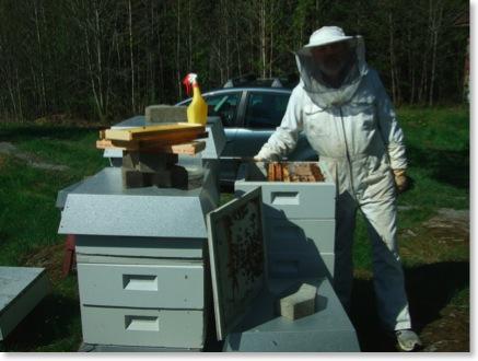 sukkerblanding til bier
